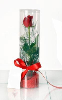 Bayburt çiçek yolla  Silindir vazoda tek kirmizi gül