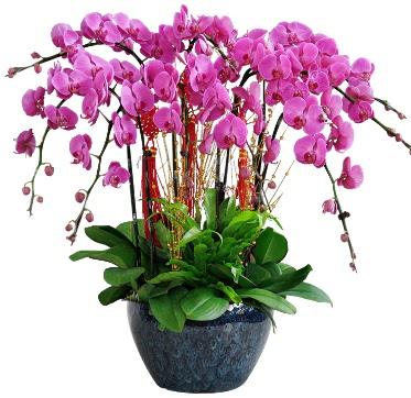 9 dallı mor orkide  Bayburt 14 şubat sevgililer günü çiçek