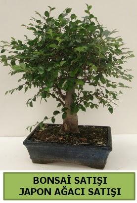 Minyatür bonsai japon ağacı satışı  Bayburt çiçek gönderme sitemiz güvenlidir