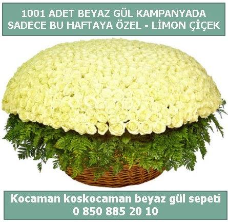 1001 adet beyaz gül sepeti özel kampanyada  Bayburt çiçek gönderme sitemiz güvenlidir