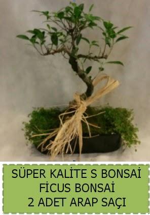 Ficus S Bonsai ve arap saçı  Bayburt çiçekçi telefonları