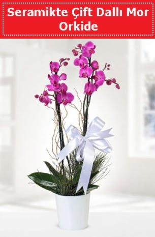 Seramikte Çift Dallı Mor Orkide  Bayburt anneler günü çiçek yolla