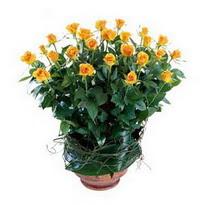 Bayburt cicekciler , cicek siparisi  10 adet sari gül tanzim cam yada mika vazoda çiçek