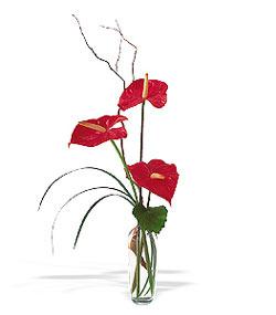 Bayburt çiçek siparişi sitesi  cam yada mika Vazoda 3 adet  antoryum