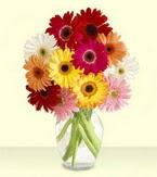 Bayburt çiçek yolla , çiçek gönder , çiçekçi   cam yada mika vazoda 15 özel gerbera