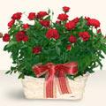 Bayburt İnternetten çiçek siparişi  11 adet kirmizi gül sepette