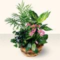 Bayburt çiçek satışı  5 adet canli çiçek sepette
