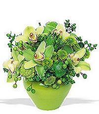cam yada mika vazoda 5 adet orkide   Bayburt online çiçekçi , çiçek siparişi