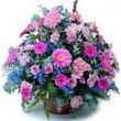 karisik mevsim kir çiçekleri  Bayburt çiçek gönderme sitemiz güvenlidir