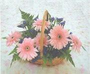 gerbera çiçeklerinde sepet   Bayburt çiçek yolla