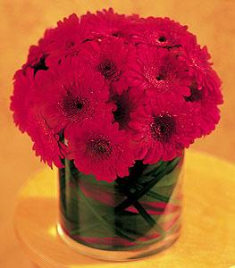 Bayburt ucuz çiçek gönder  23 adet gerbera çiçegi sade ve sik cam içerisinde