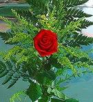 1 adet kirmizi gül buketi   Bayburt çiçek siparişi vermek
