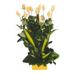 12 adet beyaz gül aranjmani  Bayburt kaliteli taze ve ucuz çiçekler