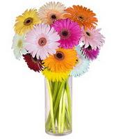 Bayburt internetten çiçek siparişi  Farkli renklerde 15 adet gerbera çiçegi