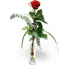 Bayburt 14 şubat sevgililer günü çiçek  Sana deger veriyorum bir adet gül cam yada mika vazoda