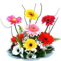 Bayburt hediye çiçek yolla  camda gerbera ve mis kokulu kir çiçekleri