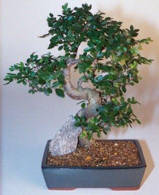 Bayburt çiçek gönderme sitemiz güvenlidir  ithal bonsai saksi çiçegi  Bayburt çiçek siparişi sitesi