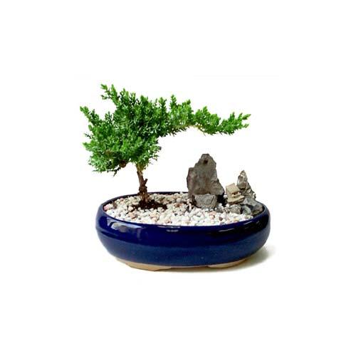 ithal bonsai saksi çiçegi  Bayburt çiçek gönderme