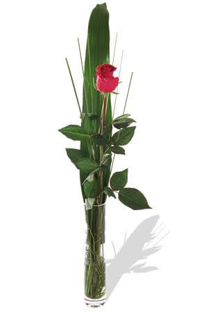 1 adet cam vazo içerisinde kirmizi gül  Bayburt çiçek , çiçekçi , çiçekçilik