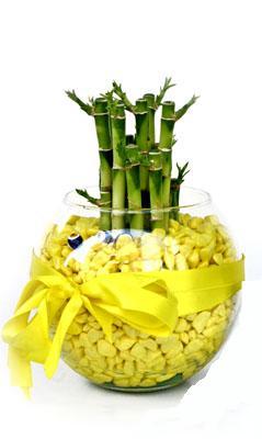 cam fanus içerisinde bambo  Bayburt internetten çiçek satışı