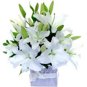 Bayburt çiçek yolla  2 dal cazablanca vazo çiçeği