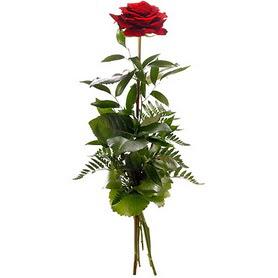 Bayburt online çiçekçi , çiçek siparişi  1 adet kırmızı gülden buket