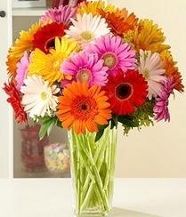 Bayburt çiçek servisi , çiçekçi adresleri  15 adet gerbera çiçek vazosu