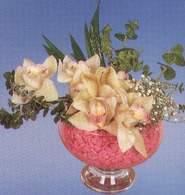 Bayburt çiçek mağazası , çiçekçi adresleri  Dal orkide kalite bir hediye