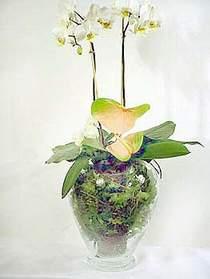 Bayburt çiçek satışı  Cam yada mika vazoda özel orkideler