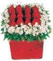 Bayburt çiçek gönderme  Kare cam yada mika içinde kirmizi güller - anneler günü seçimi özel çiçek