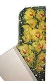 Bayburt çiçek gönderme  Kutu içerisine dal cymbidium orkide