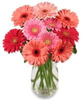 vazo içerisinde 13 adet gerbera çiçeği  Bayburt çiçek siparişi sitesi