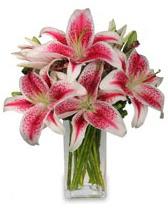 Vazo içerisinde 5 dal kazablanka çiçeği  Bayburt cicekciler , cicek siparisi