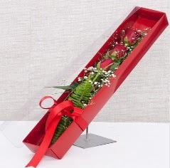Kutu içerisinde 3 adet kırmızı gül  Bayburt online çiçek gönderme sipariş