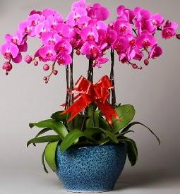 7 dallı mor orkide  Bayburt çiçek online çiçek siparişi