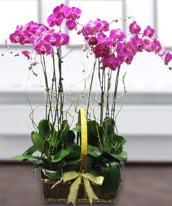 4 dallı mor orkide  Bayburt güvenli kaliteli hızlı çiçek