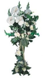 Bayburt çiçek mağazası , çiçekçi adresleri  antoryumlarin büyüsü özel
