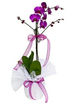Tek dallı mor orkide  Bayburt çiçekçi telefonları