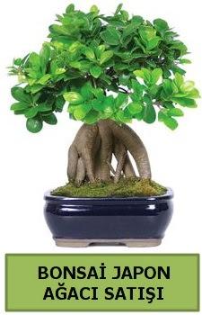 Bonsai japon ağacı satışı  Bayburt çiçek satışı