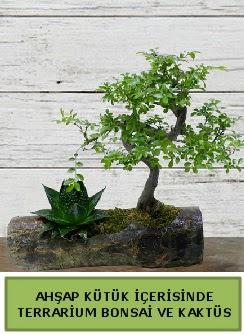 Ahşap kütük bonsai kaktüs teraryum  Bayburt internetten çiçek siparişi