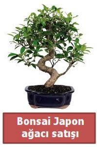 Japon ağacı bonsai satışı  Bayburt çiçek siparişi sitesi