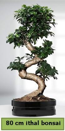 80 cm özel saksıda bonsai bitkisi  Bayburt çiçekçi telefonları