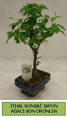 İthal bonsai japon ağacı bitkisi  Bayburt hediye sevgilime hediye çiçek