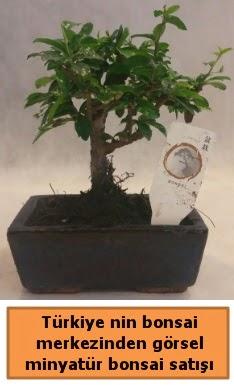 Japon ağacı bonsai satışı ithal görsel  Bayburt çiçek yolla