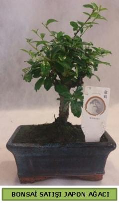 Minyatür bonsai ağacı satışı  Bayburt çiçek gönderme