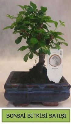 Bonsai ithal görsel minyatür japon ağacı  Bayburt ucuz çiçek gönder