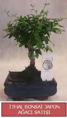 İthal küçük boy minyatür bonsai ağaç bitkisi  Bayburt çiçekçi telefonları