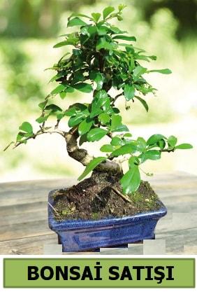 Çam bonsai japon ağacı satışı  Bayburt çiçek satışı