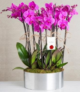 11 dallı mor orkide metal vazoda  Bayburt çiçek gönderme sitemiz güvenlidir