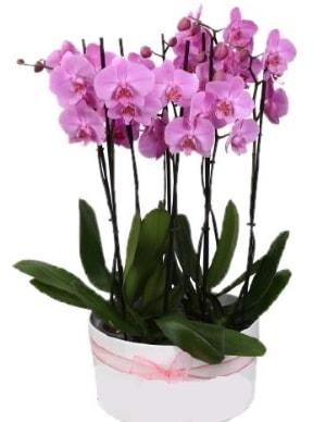 Beyaz seramik içerisinde 7 dallı mor orkide  Bayburt çiçekçi telefonları